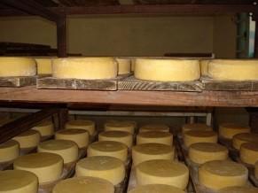 O queijo adquire cor e sabor durante a maturação (Foto: Divulgação/Luciano Machado)