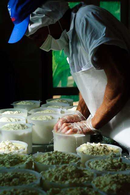Produção de queijo mineiro na região de Serro, Minas Gerais