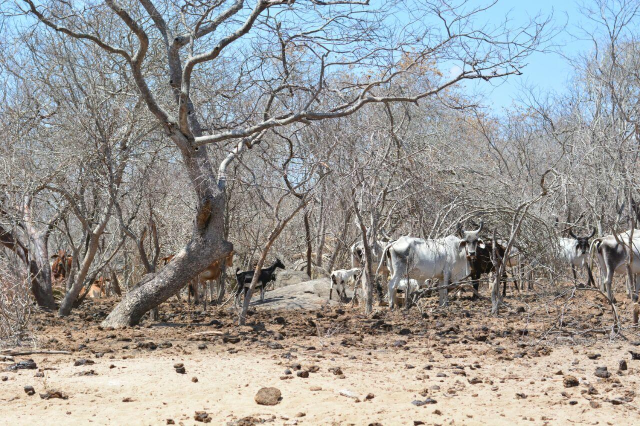 Fazenda Carnaúba, Taperoá, Paraíba, Brasil.