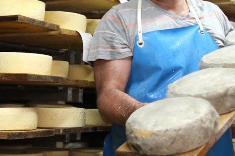 Fermentos, esses seres vivos que dão gosto e tipicidade aos queijos