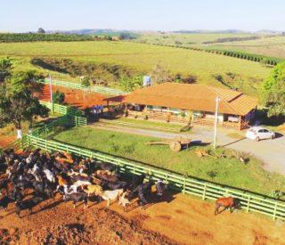 Rebanho e sede fazenda Santiago.